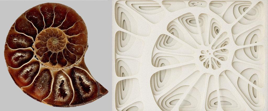 comparativa de proceso creativo entre un caracol y cuadro de papel fibonacci
