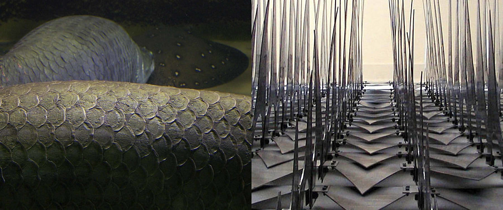 """comparativa de proceso creativo entre la piel cubiertas de escamas de un pez y la escultura articulada """"escamas mecánicas"""""""