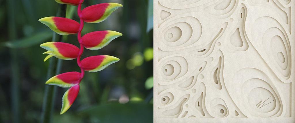 """comparativa de proceso creativo entre una flor de heliconea y obra en papel """"Péndola"""""""