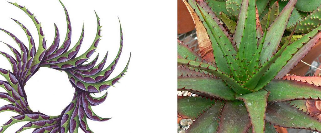 comparativa de proceso creativo entre impresión gráfica en gicleé y planta de sábila o aloe vera