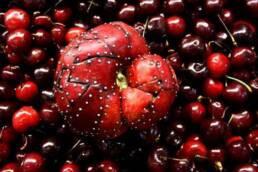 frankenfruits, ensayo fotográfico de, ensamblaje de frutas y verduras