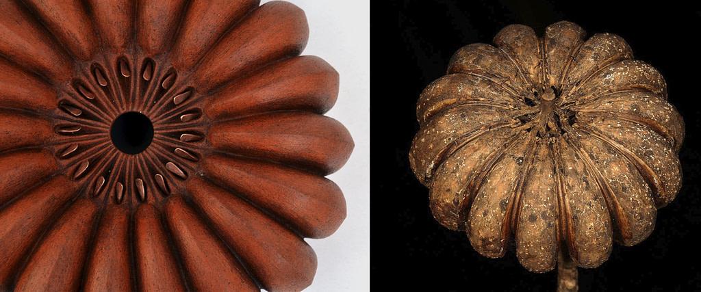 "comparativa de proceso creativo entre la semilla del hura crepitans y la escultura de la serie semillas ""Jabillo"""