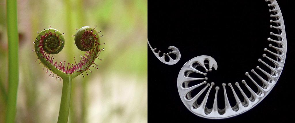 """comparativa de proceso creativo entre la planta carnívora drosera y el collar de plata 9.25 """"Drosera"""""""